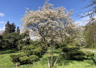 Fühlingsbäume